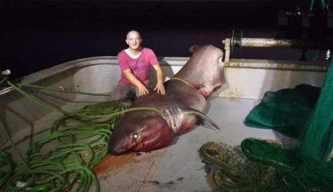 Türkiyədə balıqçılar beş metrlik akula tutub - ŞƏKİL