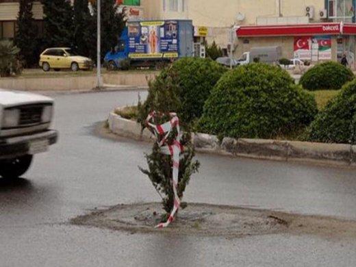 """Sumqayıtda yoldakı """"lyuk""""a şam ağacı basdırılıb - ŞƏKİL"""